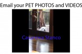 Email your PET PHOTOS and VIDEOS