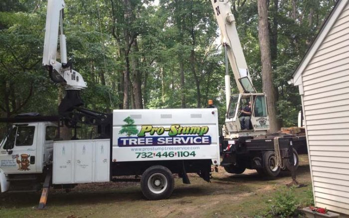 Need a Tree Expert? Call Pro Stump! | The Source