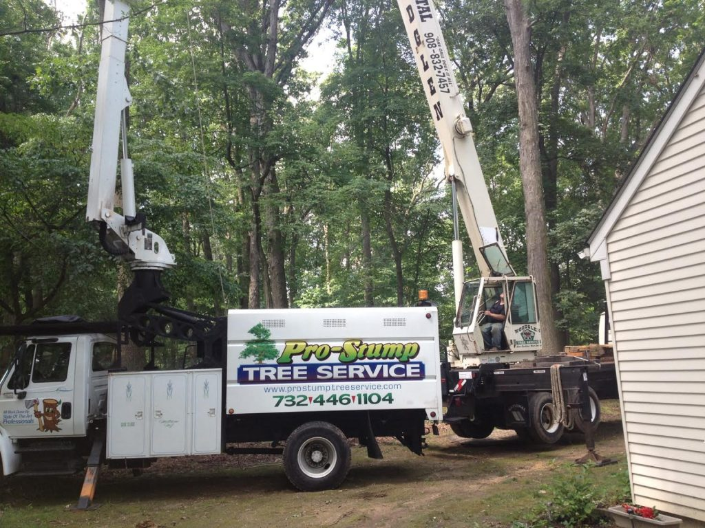 As A Testament To How Efficiently And Effectively Pro Stump Comes In Gets The Job Done They Recently Completed One Day For Township Of